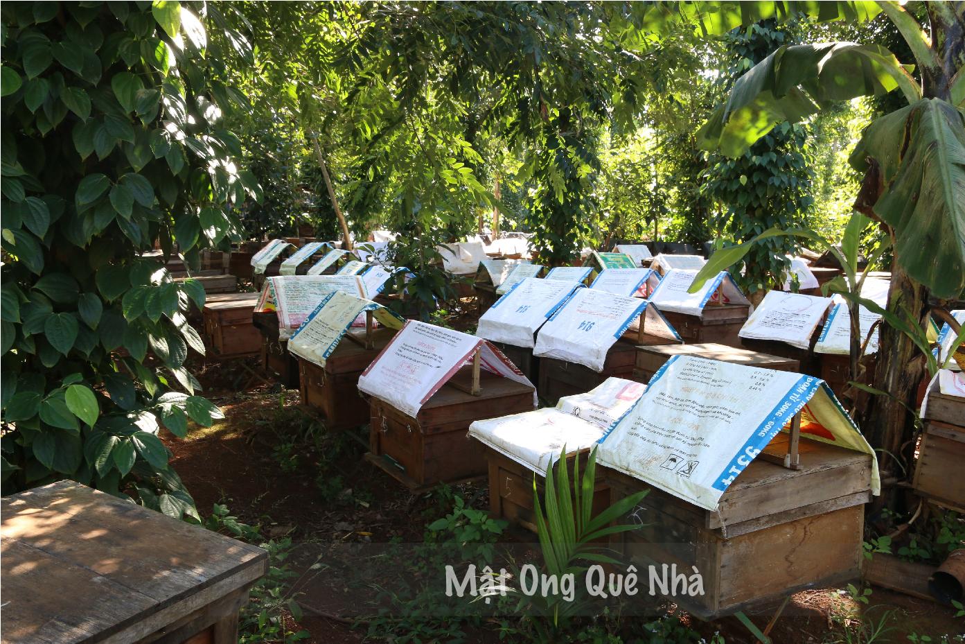 mua mật ong nguyên chất ở Sài Gòn