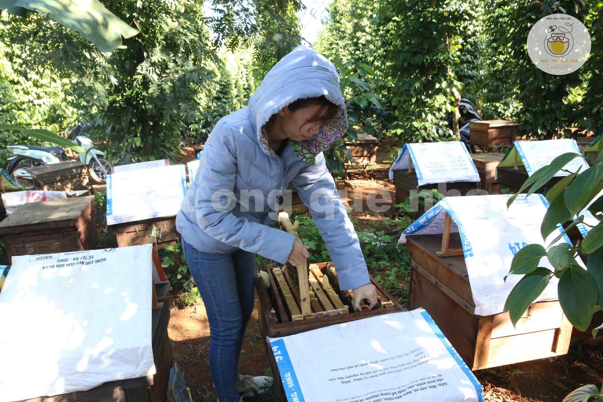 mật ong nuôi