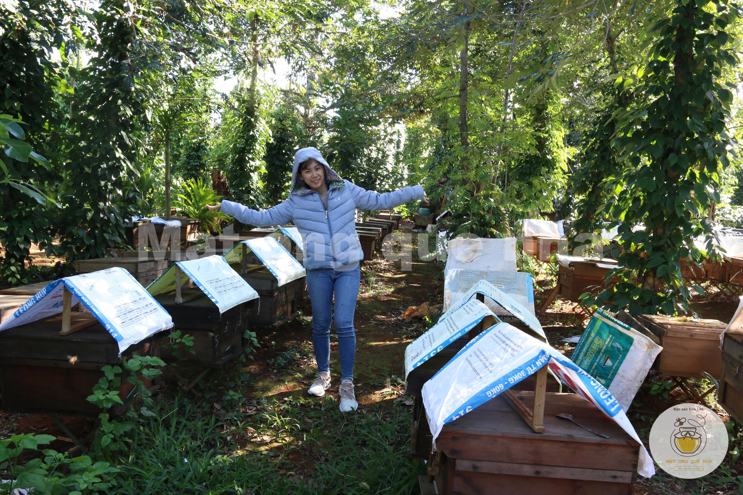 Trang trại mật ong hoa cà phê Đăk Lăk